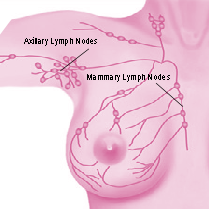 diagram of lymph nodes of breast